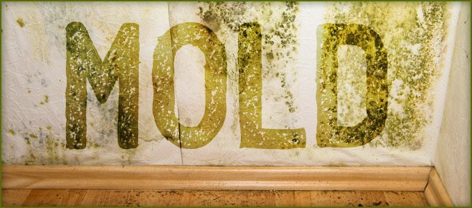 Mold in House? Reduce the Risk With Foam Insulation